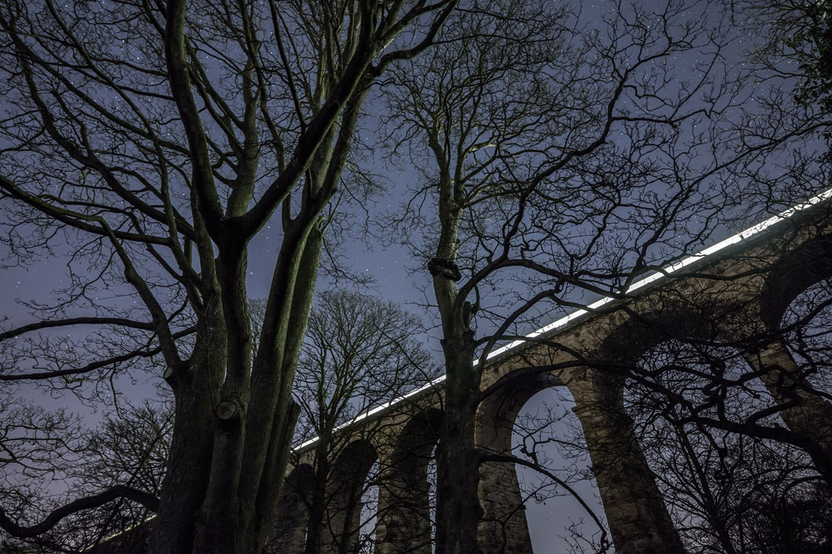 Trees Harrogate Winter Crimple Viaduct  Crimple Viaduct at Night photo