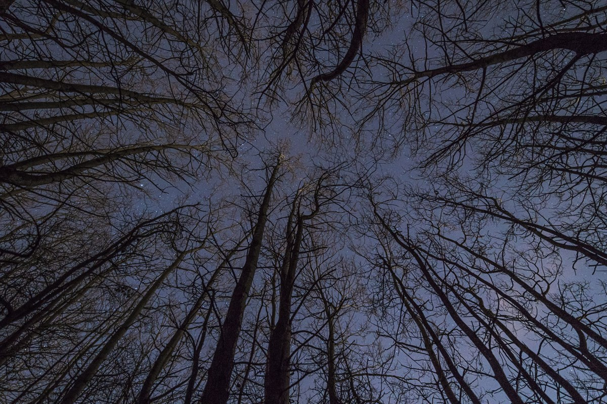 Trees Harrogate Winter  Crimple Valley Woodland at Night photo