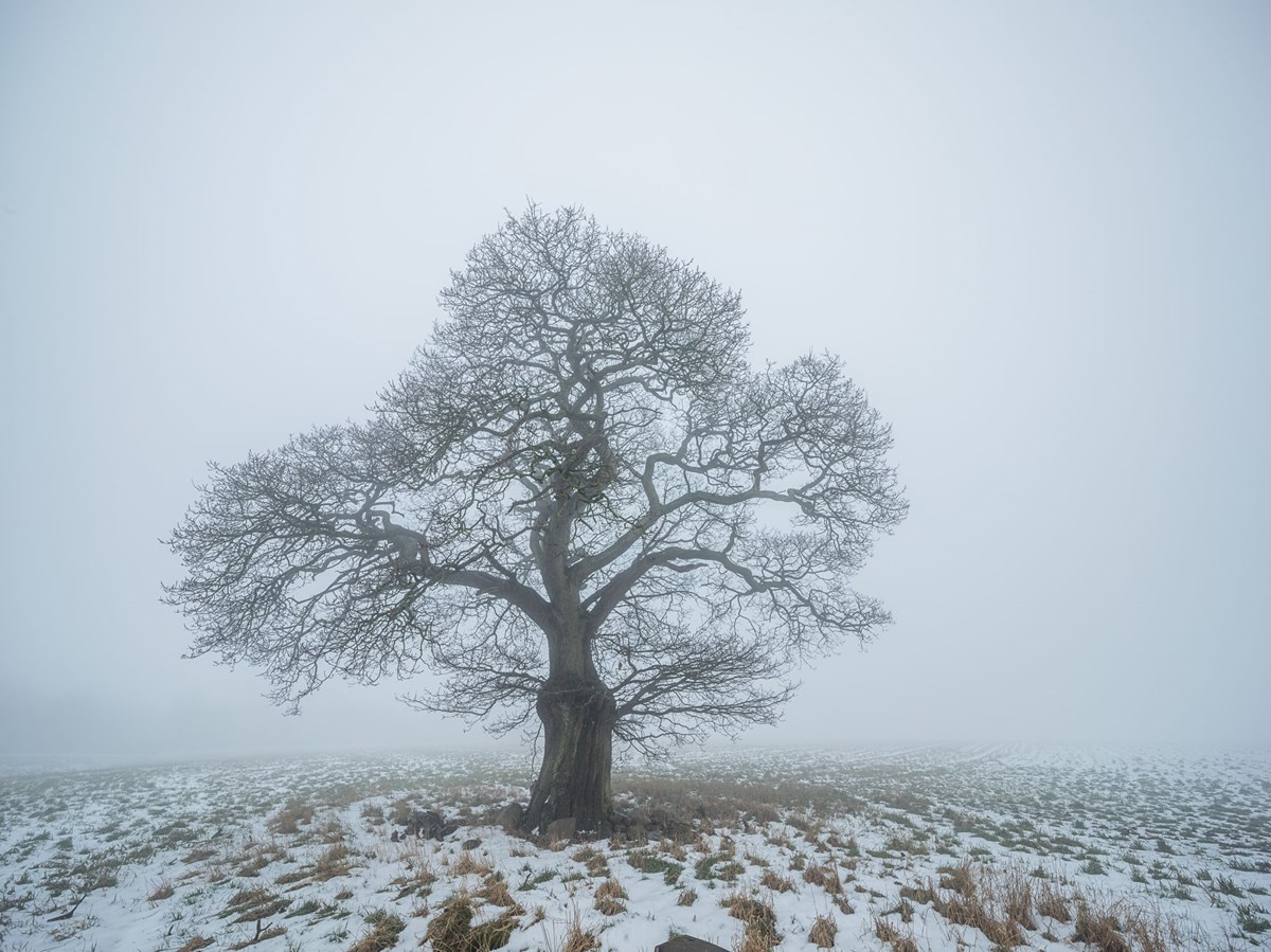 Harrogate Trees Winter  PN18 photo