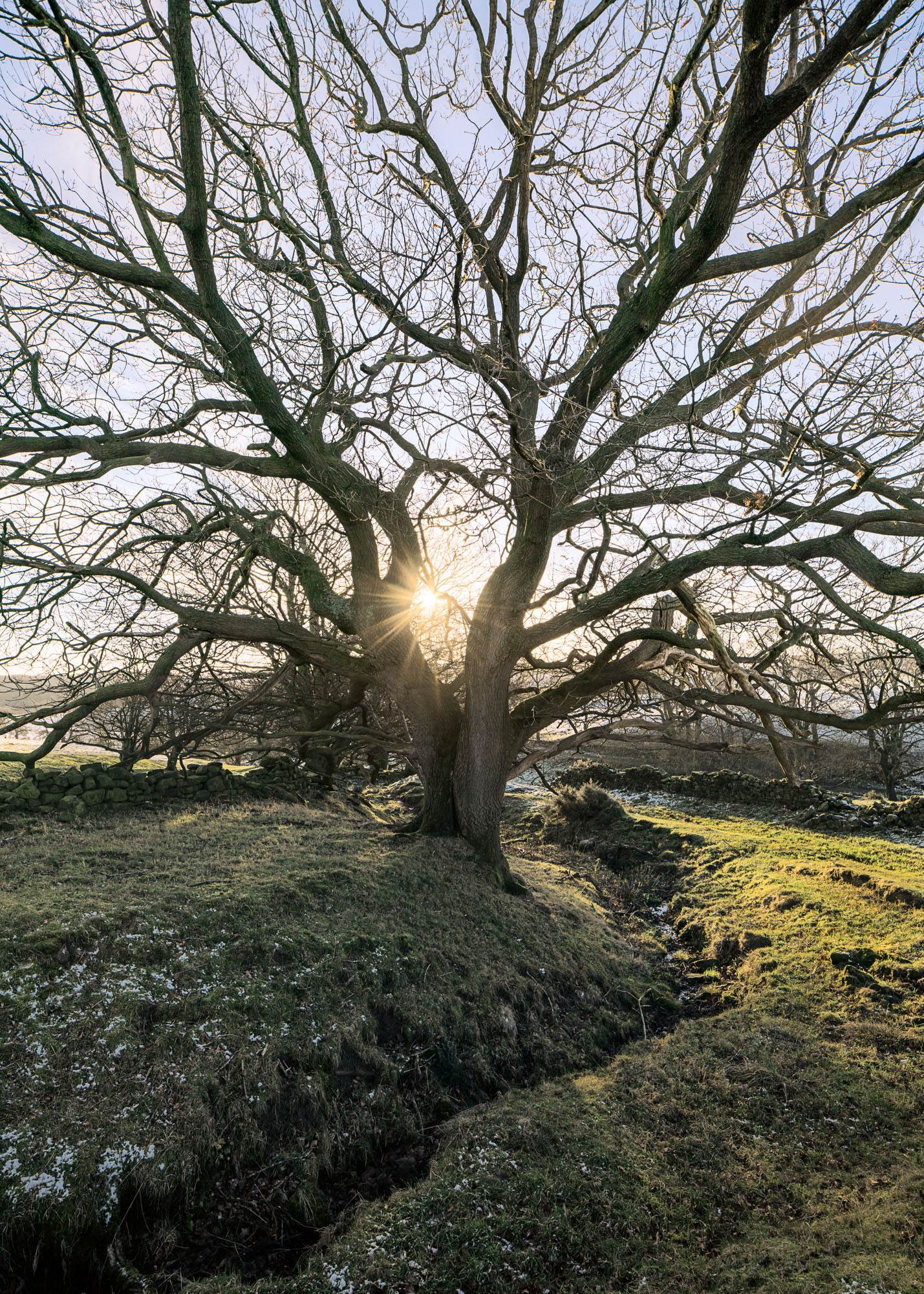 Trees Wharfedale Winter  Checking out the A7rii photo