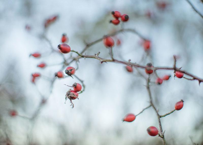 Hedgeway berries