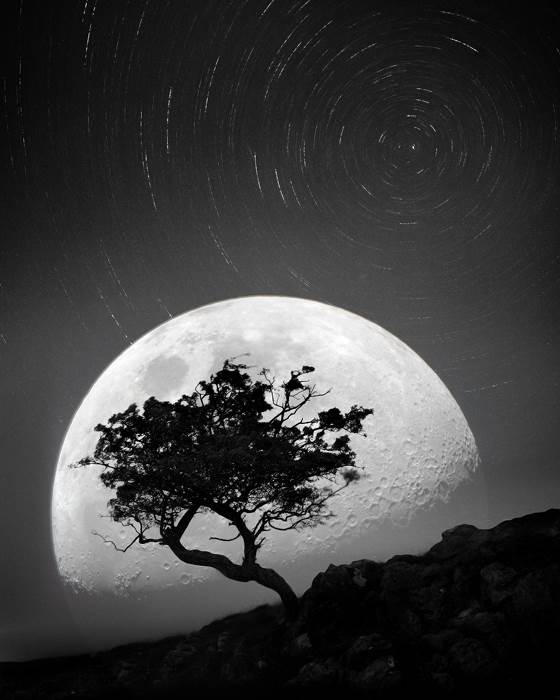 Trees Composite Image  Dancing with the moonlight night photo