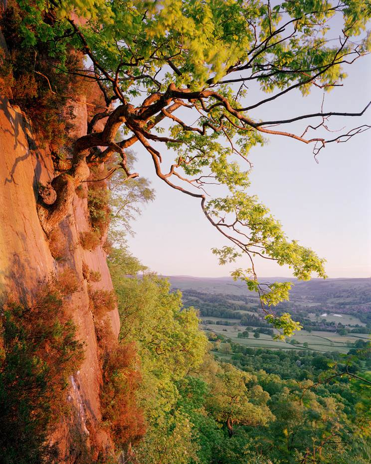 Tree growing out of cliff face