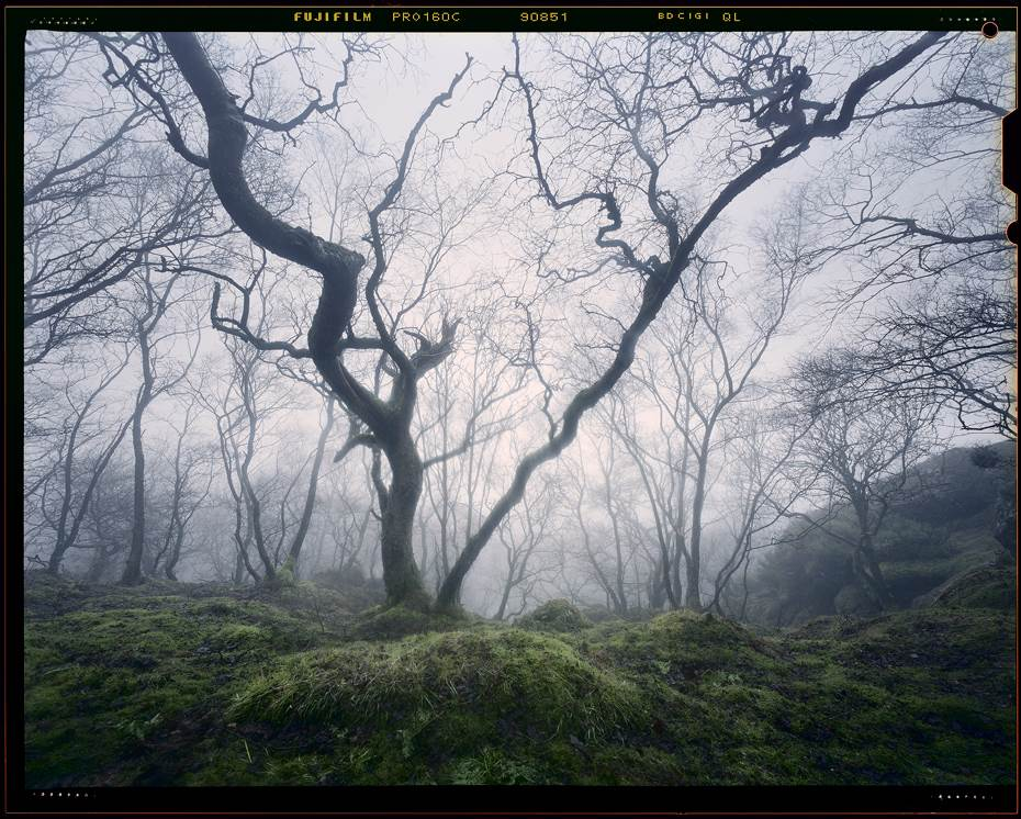 Enchanted forest, misty woodland