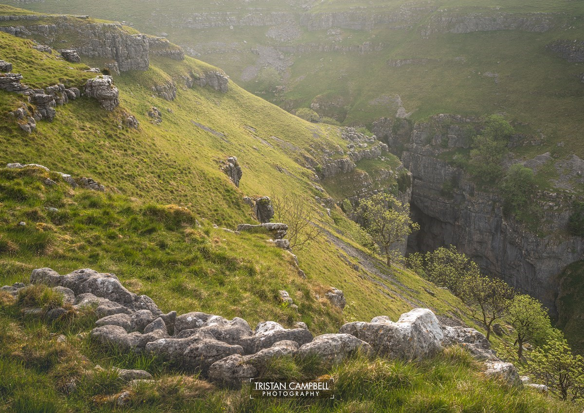 a herd of sheep standing on top of a lush green hillside