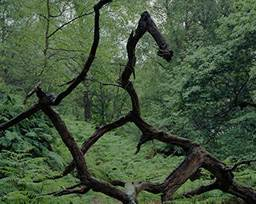 Fallen branches in the rain